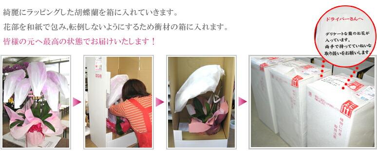 包装作業から配送までの様子1