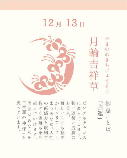 12月13日 月輪吉祥草(つきのわきちじょうそう)