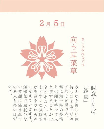 2月5日 向う耳菜草(むこうみみなぐさ)