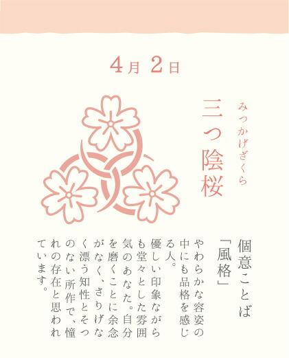 4月2日 三つ陰桜(みつかげざくら)