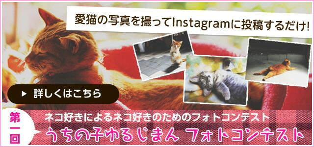 愛猫の写真を撮ってInstagramに投稿するだけ!ネコ好きによるネコ好きのためのフォトコンテスト 第一回 うちの子ゆるじまん フォトコンテスト