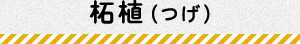 柘植(つげ)