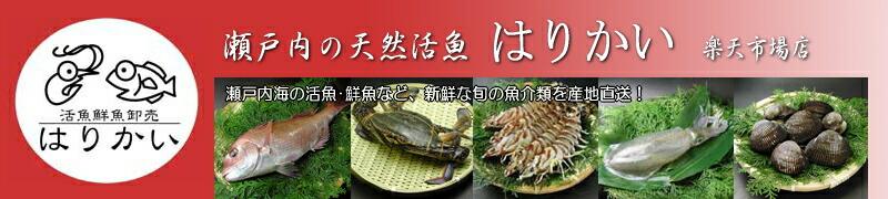 瀬戸内の天然活魚 はりかい 楽天市場店