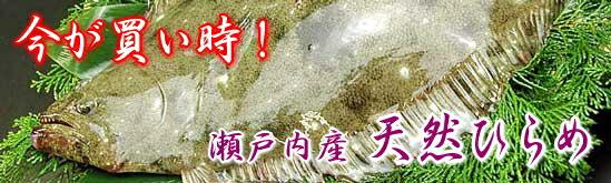 瀬戸内産 天然ヒラメ