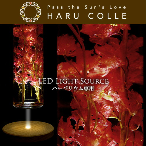 ハーバリウム/LEDコースター