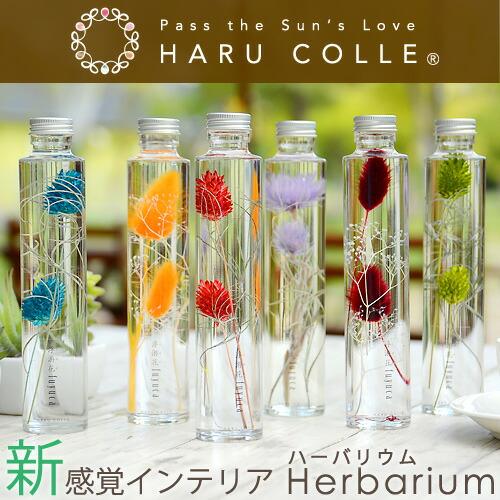 ハーバリウム/一輪タイプ