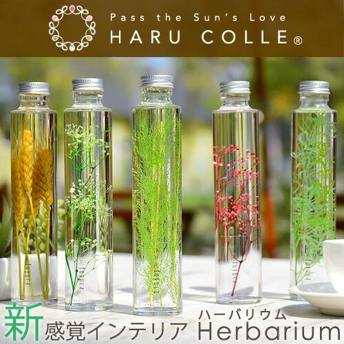 ハーバリウム/グリーン系