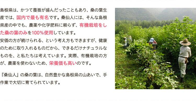 桑の葉について