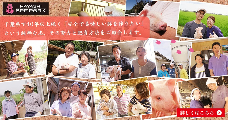 千葉県で40年以上続く「安全で美味しい豚を作りたい」という純粋な想い。その努力と肥育方法をご紹介します。