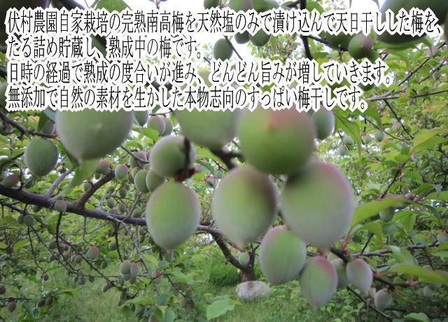 伏村農園自家栽培の完熟南高梅を天然塩のみで漬け込んで天日干しした梅を、たる詰め貯蔵し、熟成中の梅です。日時の経過で熟成の度合いが進み、どんどん旨みが増していきます。無添加で自然の素材を生かした本物志向のすっぱい梅干しです。