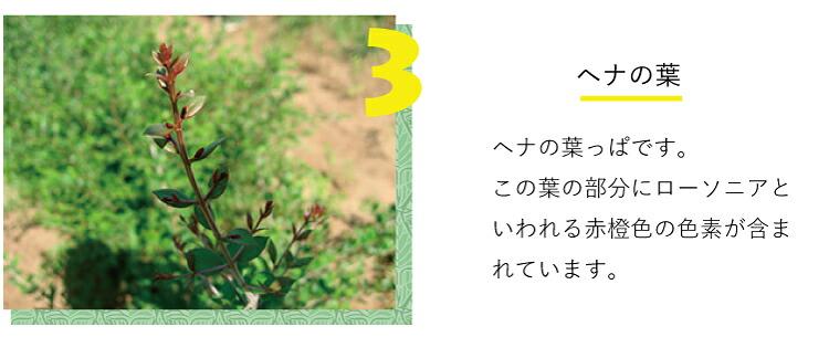 ヘナの葉っぱの写真です。この葉の部分にローソニアといわれる赤橙色の色素が含まれています。