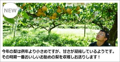 福田稔農園 梨