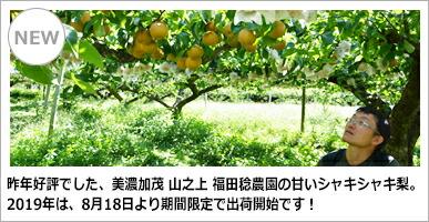 山之上 福田稔農園 梨