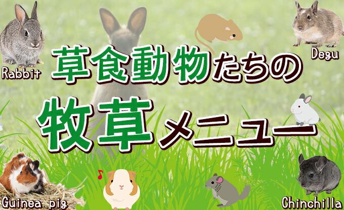 草食動物たちの牧草メニュー