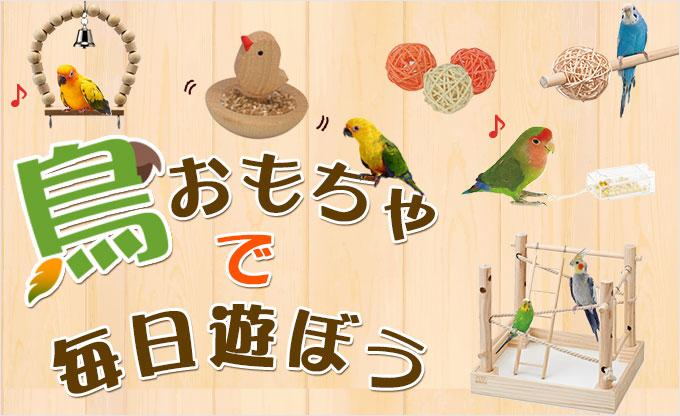 鳥おもちゃで毎日遊ぼう