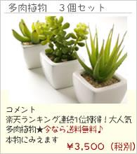 多肉植物3個セット