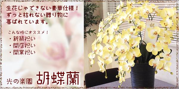 光の楽園|光触媒胡蝶蘭