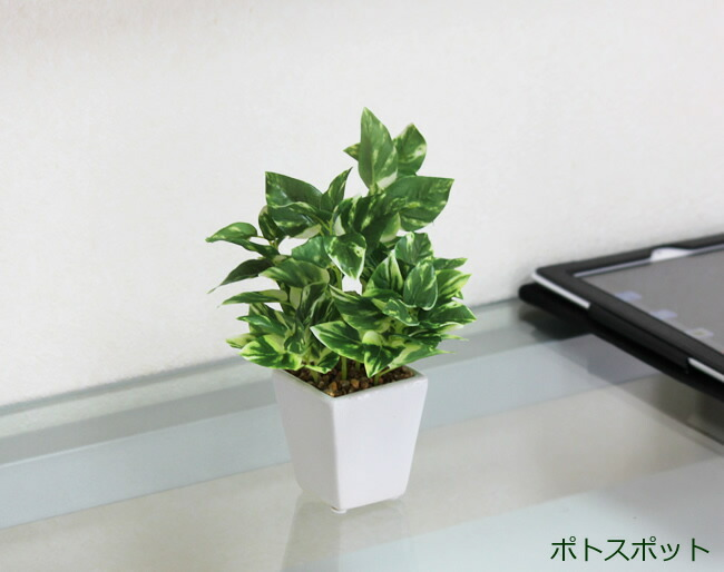 光触媒 人工観葉植物