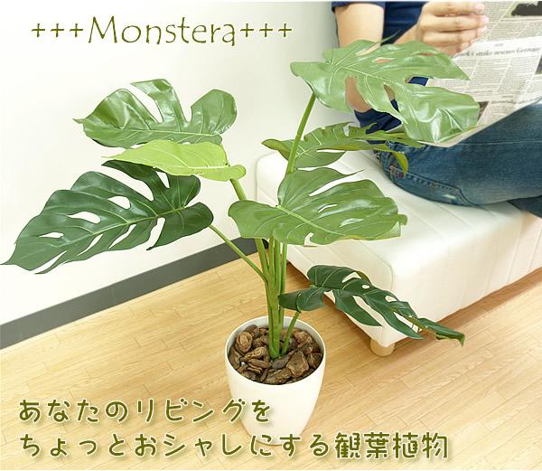 リビングをオシャレにする観葉植物