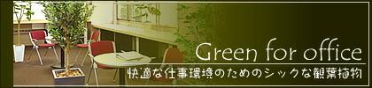 オフィス向け観葉植物 ギフト 贈り物 開業祝 開店祝