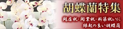 胡蝶蘭(コチョウラン) 光の楽園 光触媒 観葉植物 造花 開店祝い開業祝い新築祝いなどのギフトに