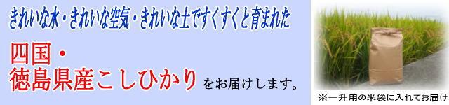 徳島県産こしひかり