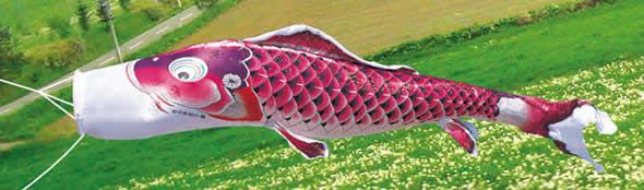 吉兆 慶祝の鯉 撥水加工 ポリエステルジャガード 家紋・名入れ可能 桐箱入り