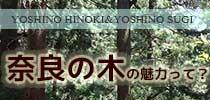 奈良の木の魅力とは