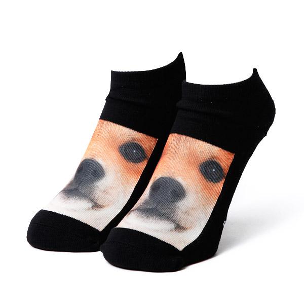 SHIBA/柴犬