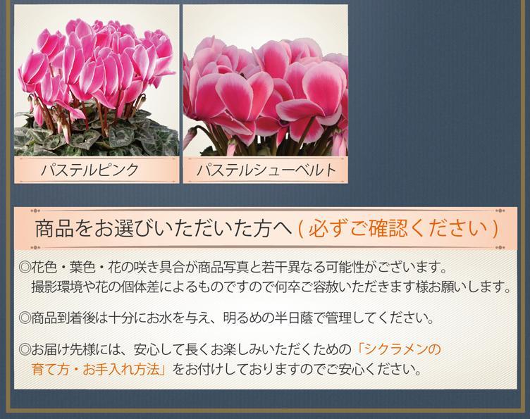 商品紹介2