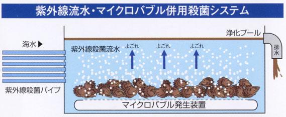 楽天市場】鮮魚・水産物 > 牡蠣 > 堀口海産:ひろしまグルメショップ