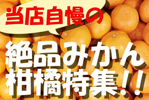 当店自慢の絶品みかん、柑橘特集!!