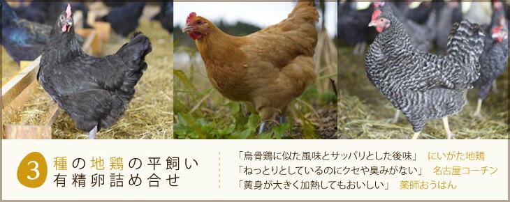 3種の地鶏の平飼い有精卵詰め合せ (岡崎おうはん・名古屋コーチン・にいがた地鶏 各10個合計30個)