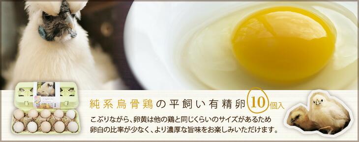 純系烏骨鶏の平飼い有精卵10個入