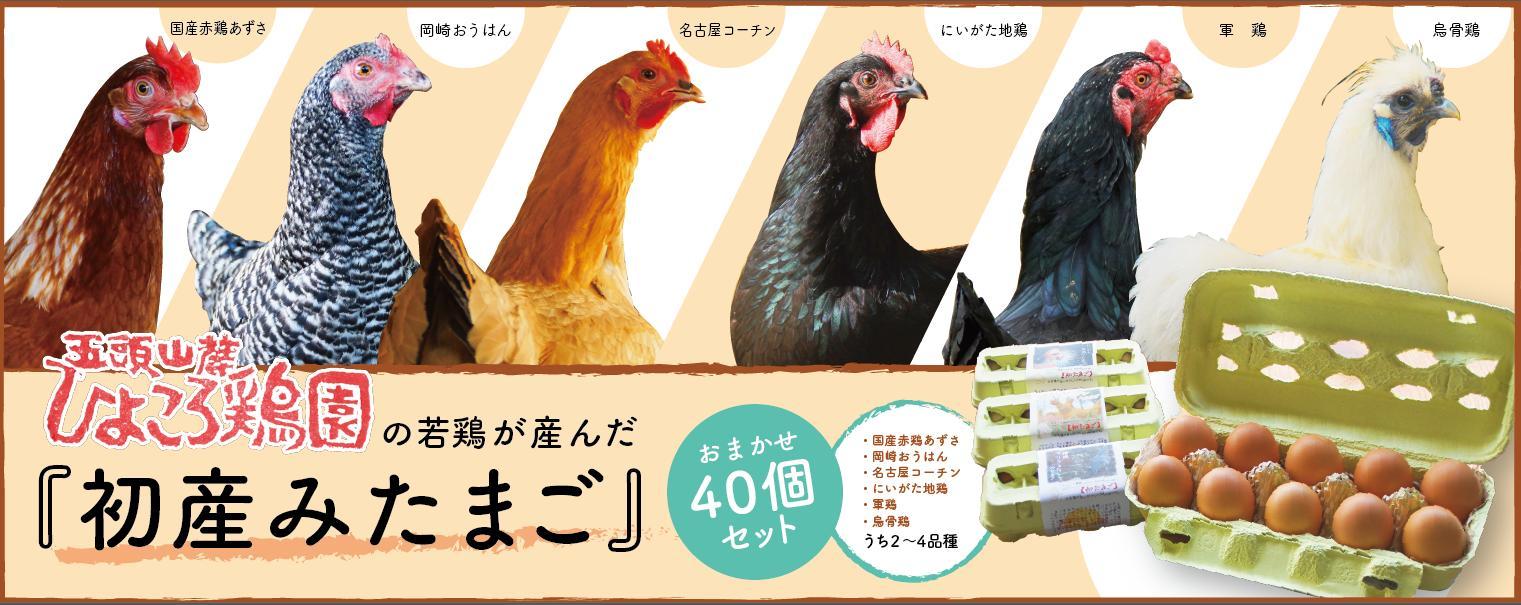 ひよころ鶏園の若鶏が産んだ初産み玉子おまかせ40個セット