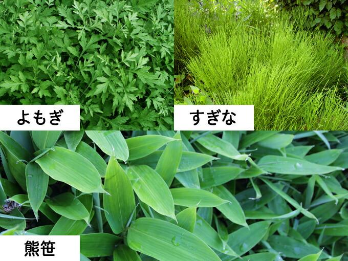 高品質の国産野草を使用