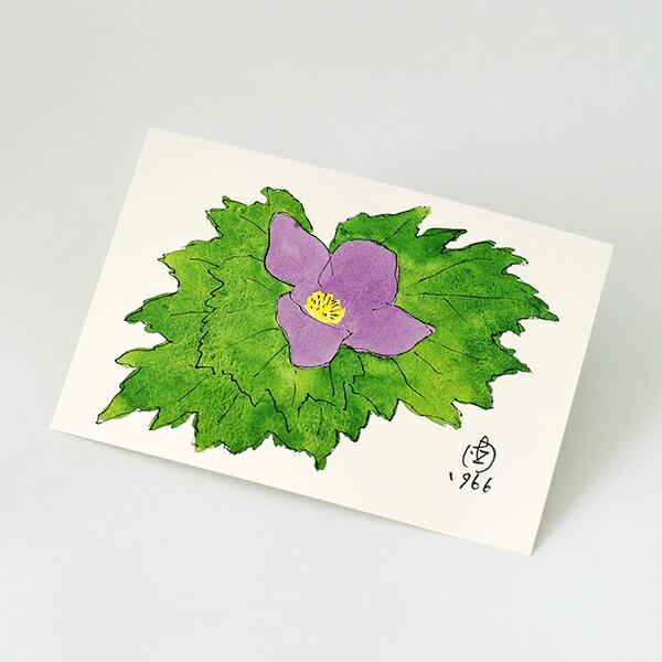 六花亭 ポストカード(しらねあおい) 1枚