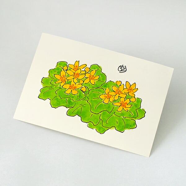 六花亭 ポストカード(えぞのりゅうきんか) 1枚