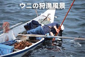 北海道礼文島利尻昆布礼文島猫岩/送料無料