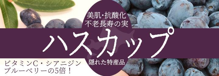 北海道の隠れた特産品「ハスカップ」。不老長寿の実とよばれる市場に出回らない希少な果実。