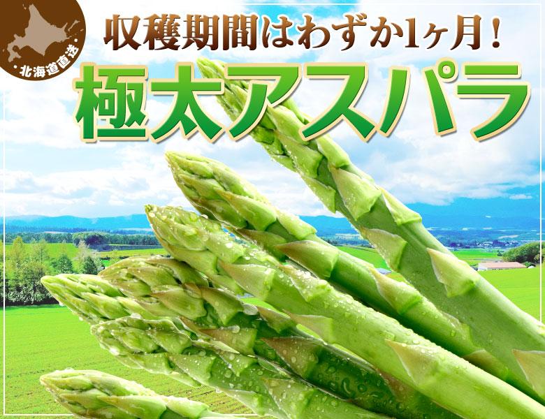 収穫期間はわずか1ヶ月! 北海道産 朝採れアスパラ