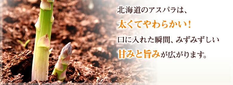 北海道のアスパラは、太くてやわらかい!口に入れた瞬間、みずみずしい甘みと旨みが広がります。