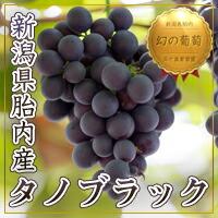 ほっかりもちのブドウ,ぶどう,葡萄,送料無料,送料込み,美味しい
