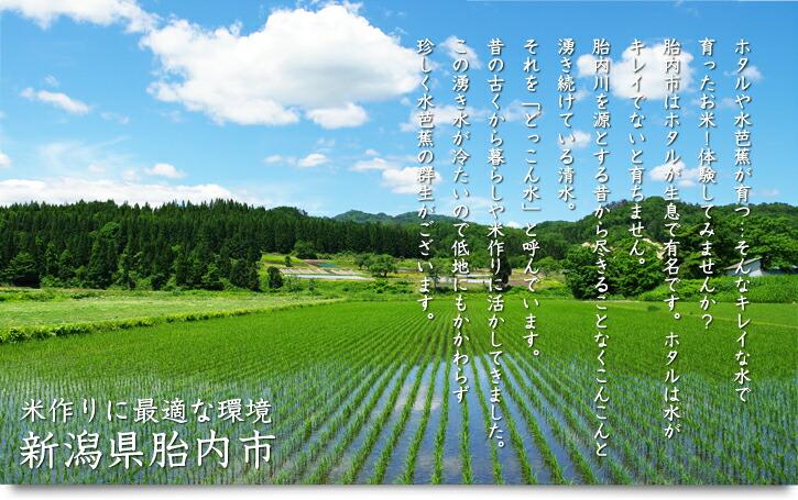 米作りに最適な環境 新潟県胎内市