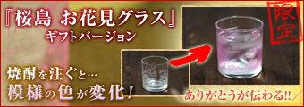 桜島お花見グラスギフトバージョン