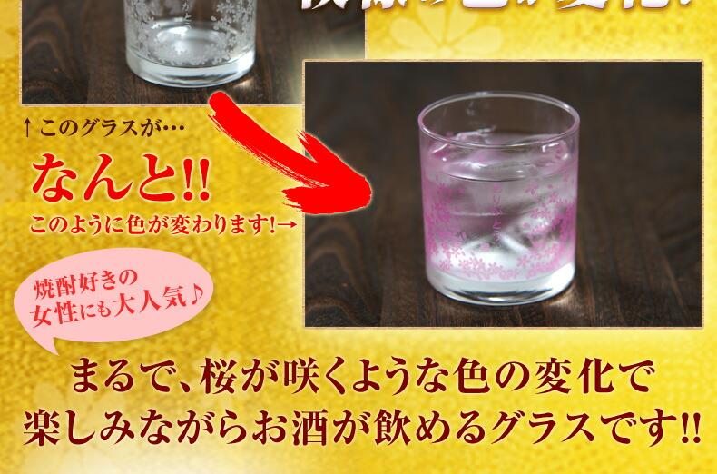 桜島 お花見グラス