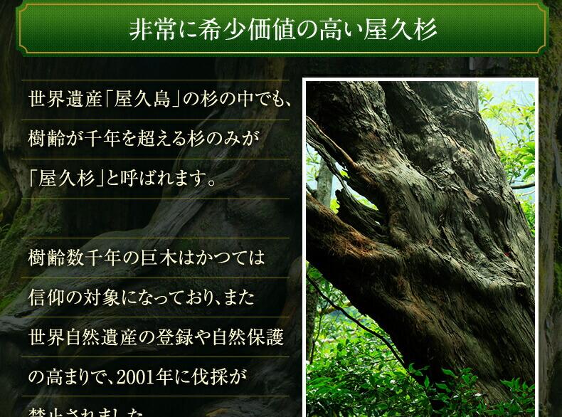 非常に希少価値の高い屋久杉