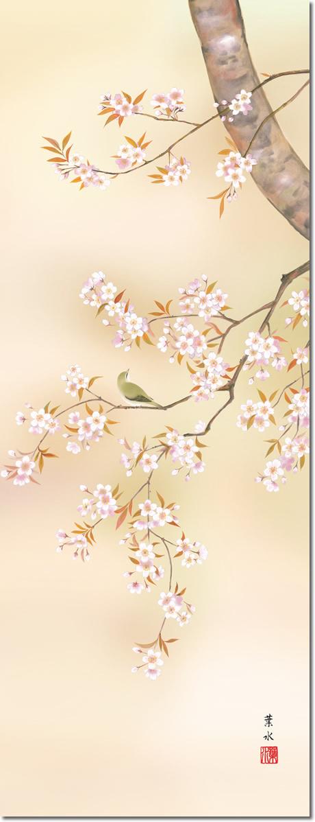 掛け軸-桜花/緒方葉水(尺五・桐箱・風鎮付き)