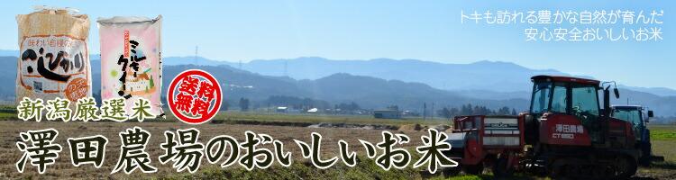 澤田農場 美味しい 産地直送 送料無料