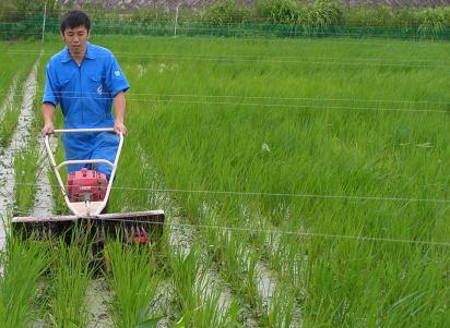 雑草を除草機で除草中